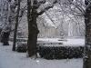 Allée de tilleul sous la neige