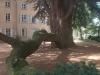 Branche du cèdre
